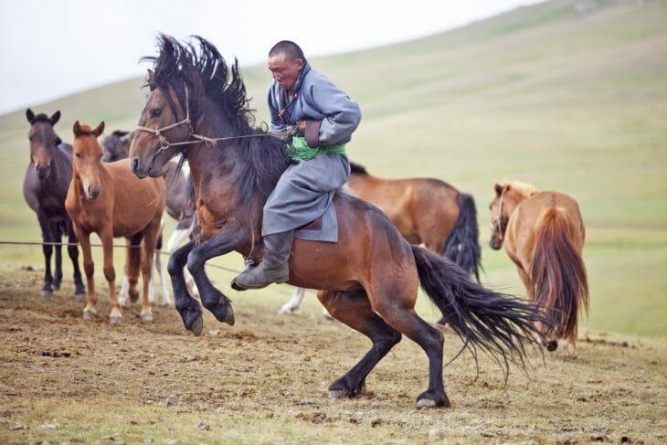 Horse Mongolia Motonomad